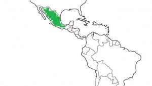 nombre dulce de leche en mexico